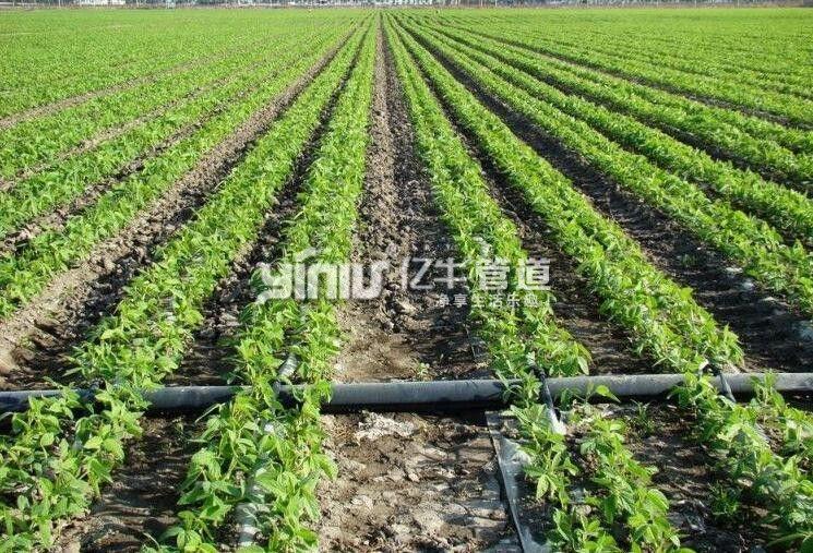 PE低压灌溉管工程